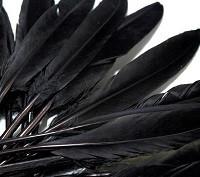 perje 9 - 14 cm, črno, 1 kos