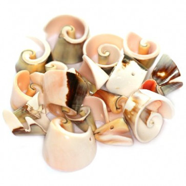 školjke, spiralne 1,5 - 2,5 cm, 10 gr