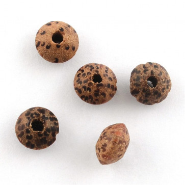 naravne perle - Bodhi, 6x8~9mm, velikost luknje: 2 mm, 10 kos