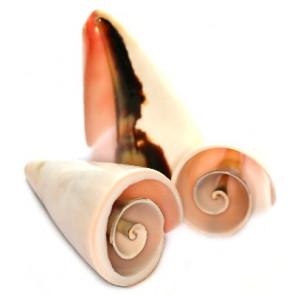 školjke spiralne 3-5 cm, naravne barve, 50 gr